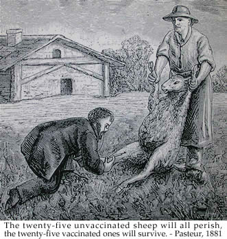 Illustration Vaccinating sheep for anthrax from 1926 edition of de Kruif's Microbe Hunters